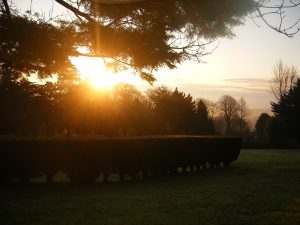 Sunrise over the trees at Epiphany House