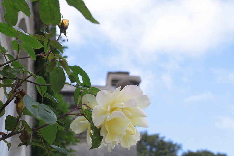 Yellow roses: personal retreat day