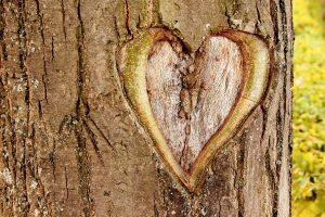 heart tree bark